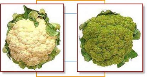 A cauliflower and a broccoflower.