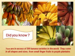 Information about Banana