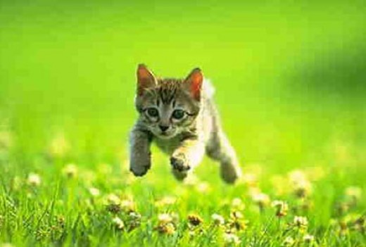 Don't keep your kitten away from this joy! (c)clevelandseniors.com