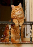 The balcony of your apartment can be a compromise. (c) catlover-giftsworld.com