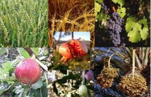 The 7 species are:  wheat, barley, vines, figs, pomegranate, olive, and honey