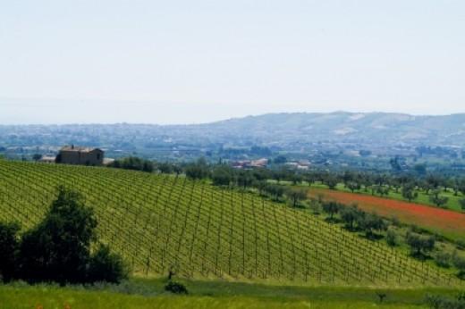 Vineyard image by Pixomar