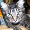 PrettyPanther profile image