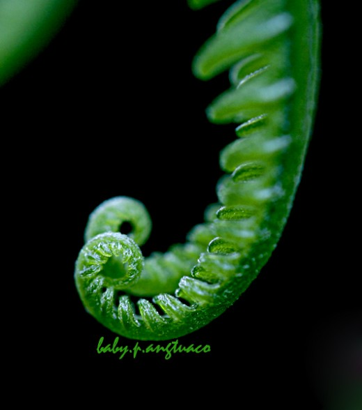fern symmetry and curve