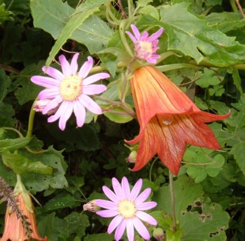 Wild flowers in Taborno