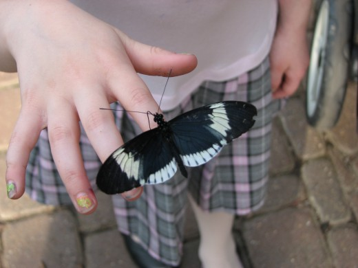 I thought this was really cool, that my daughter got a Sara Longwing to land on her finger.