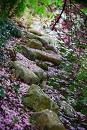 Boulders strewn with Cherry blossoms.