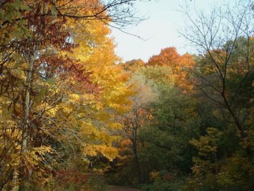 Glorious fall foliage - Photo by timorous