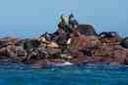 Sea Lions near La Paz