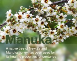 Manuka Honey health -Benefits- Honey And Nuts Fight Cholesterol