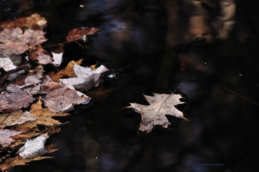 An old oak leaf blown into the creek floats downstream.