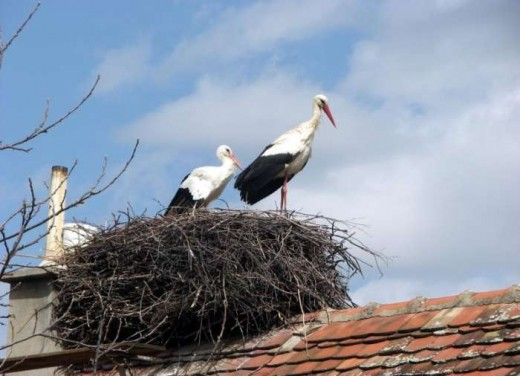 Malena and Rodan in their nest