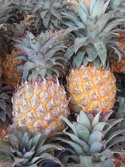 How to Grow a Pineapple Tree?