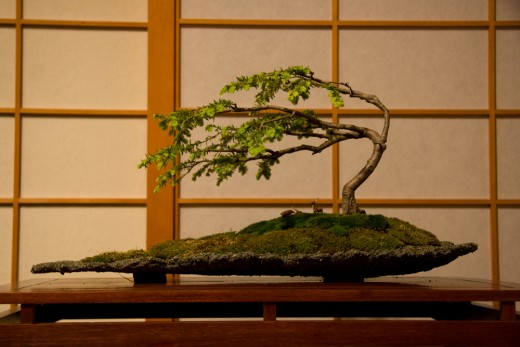 Bonsai #16 by ortizmj12