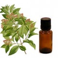 Sandalwood  Essential Oil: Why Use it?