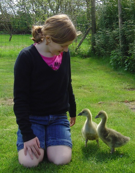 Children love the hunt, the Easter eggs and the goslings