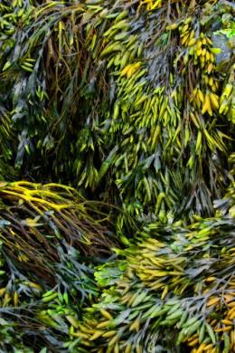 Colorful seaweed
