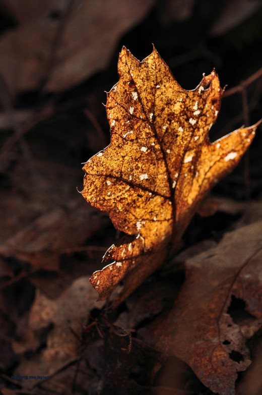 An oak leaf shows beauty can be found even after its prime.