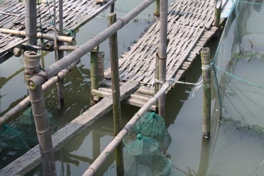 Bamboo used in fish farm