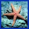 Starfishfelix profile image