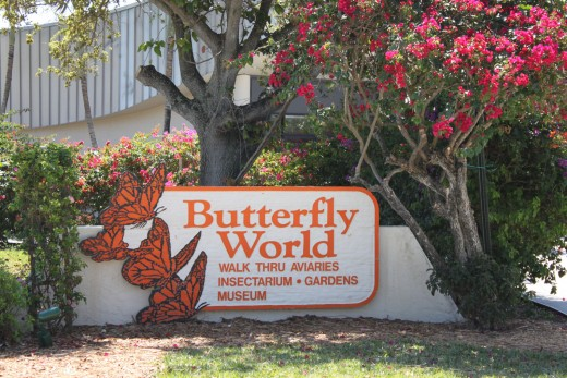 Welcome to Butterfly World