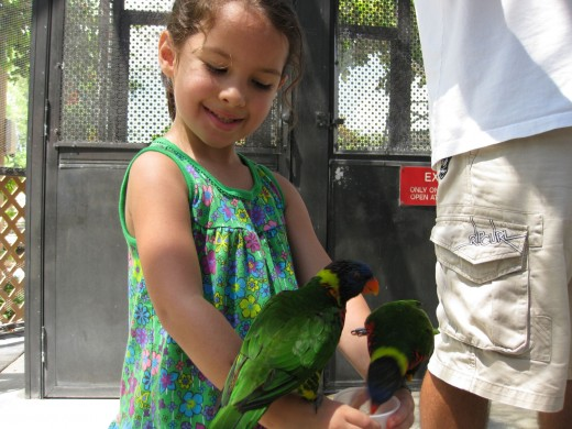 Lorikeet Encounter