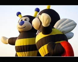 These two Bumble Bee's were to earn money for Breast cancer Awareness since they have the pink ribbon on their chests.