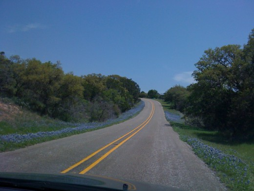 Bluebonnets lining the road.