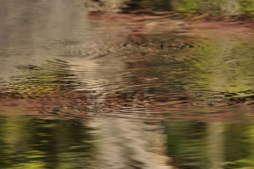 I liked the reds, greens and whites reflecting in the creek with ripples from a pair of water striders.
