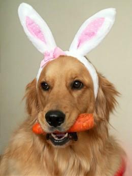 Wait a minute! That's NOT a rabbit!