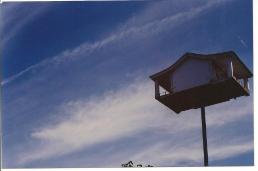 This birdhouse keeps watch over the pool.