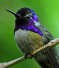 How To Attract Hummingbirds Into Your Life