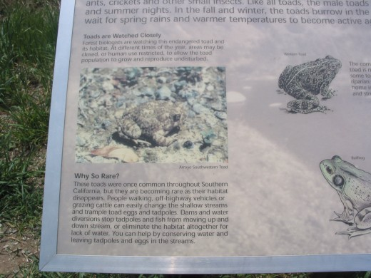 This plaque describes the plight of the Arroyo Toad in California.All hiking shots were taken by Your Truly, April 1st/2010.