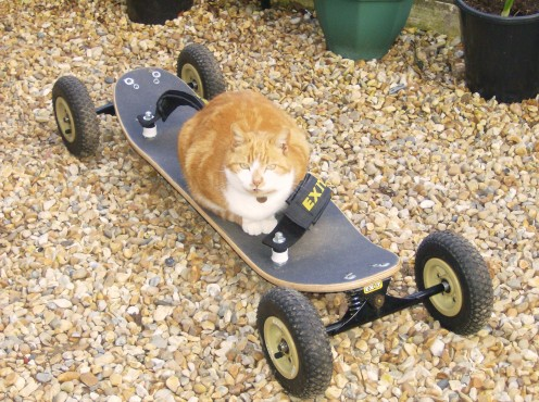 Ginger cat riding a skateboard.
