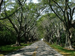 I was driving down a tree-lined road, and a love song reminded me of a wonderful evening