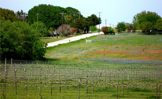 Looking back at Salem Road from Pleasant Hill Winery with wildflowers in bloom