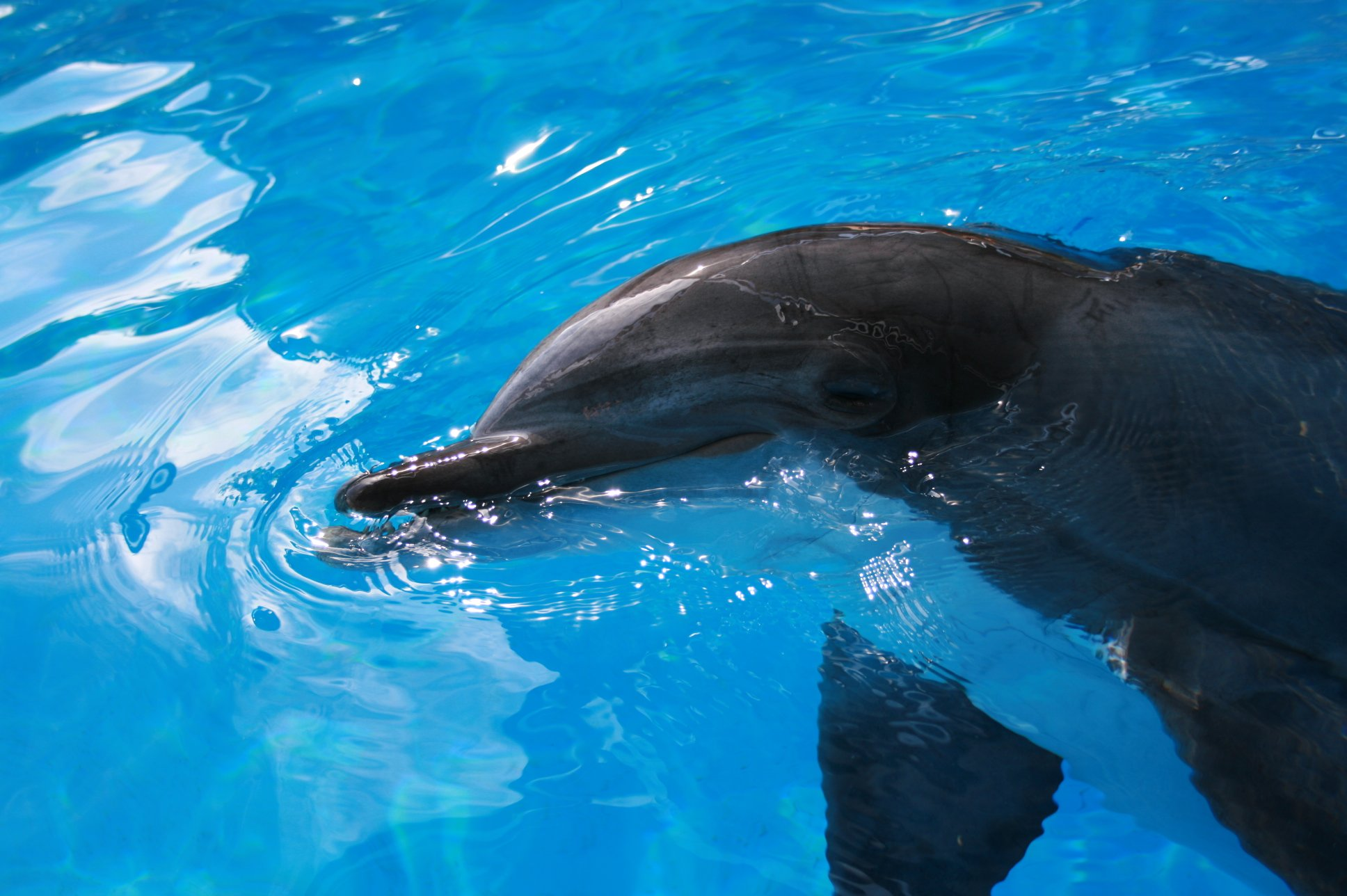 More dolphin pictures below