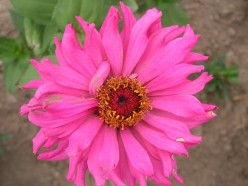 Tips for Spring Flower Gardening - Growing Flowers 7 Different Ways
