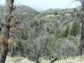 Walking In The San Bernardino Mountains
