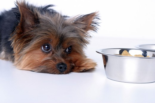 Sick dogs often lose their appetite.