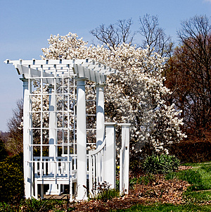 Gate and Magnolia