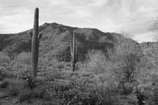 B & W desert in AZ.