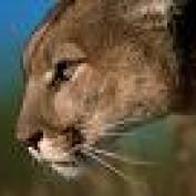 flpantherdefender profile image
