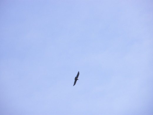 Then there was only one Condor left and I realize, to be free is also means to be on your own...
