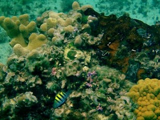 This shot was taken in the waters at Paradise Cove. Also known as Dead Mans Reef