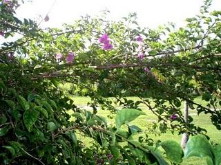 More foliage at Viva Wyndham