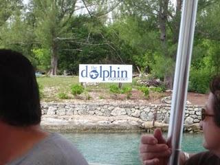 Unexso dolphin swim