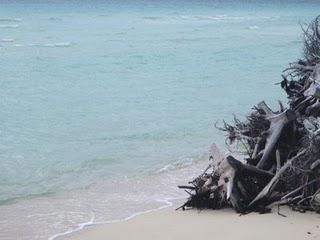 Driftwood at Gold Rock Beach