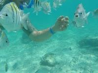 Fish swim right up to you, fortuna beach
