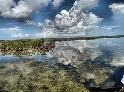 Mangroves on the airboat ride